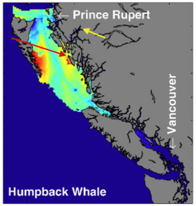 humpback opportunity