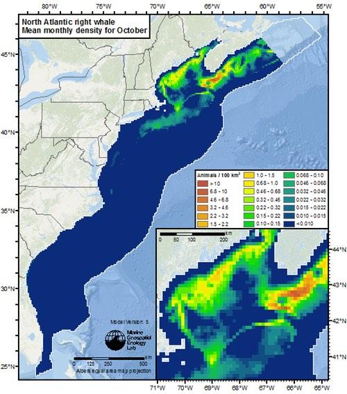 EC_North_Atlantic_right_whale_Oct WEB500